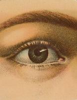 Bild von John Derian Picture Book